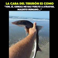 Foto De Tiburon Pequeno