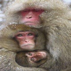 Fotos De Animales En Familia