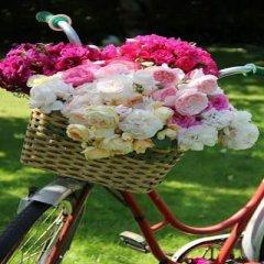 Fotos Lindas Con Rosas
