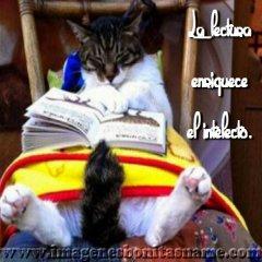 Gatito Durmiendo Con Libro