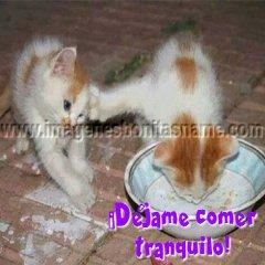 Gatitos Peleando Por Comida