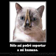 Gato Tapandose La Nariz
