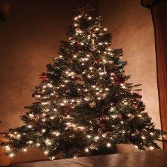 Hermoso Arbol De Navidad