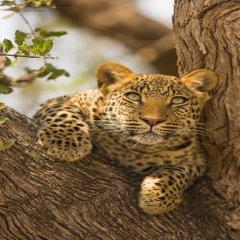 Hermoso Leopardo En Imagenes De Animales