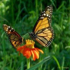 Hermosos Paisajes Naturales Mariposas