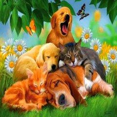 Imagen De Perros Con Gatos Hermoso