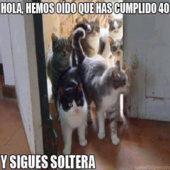 Imagen Graciosa Gatos Llegan A Casa