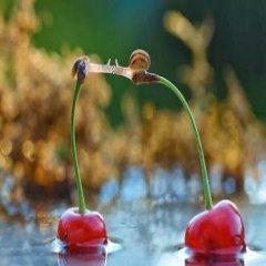 Imagenes De Amor Caracoles Amorosos