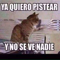 Imagenes De Gatos Ya Quiero