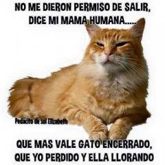 Imagenes Y Frases De Gatos