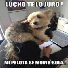 Lucho Perro Mi Pelota
