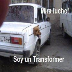 Lucho Perro Soy Un Transformer