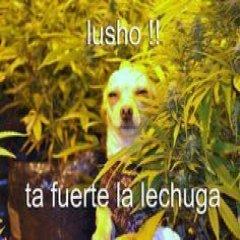 Lucho Perro Ta Fuerte La Lechuga