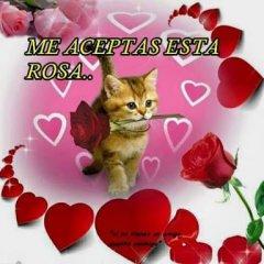 Me Aceptas Esta Rosa