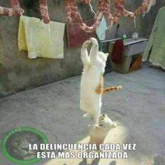 Meme Perro Y Gato Se Ayudan