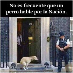 Perro Lucho Habla Por La Nacion