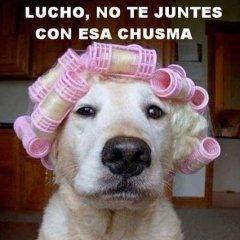 Perro Lucho Imagenes Para Facebook