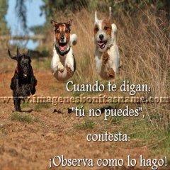Perros Correteando