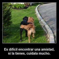 Perros Amigos
