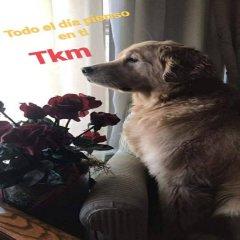 Todo El Dia Pienso En Ti Perritos Con Frases Inspiradoras