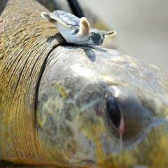 Tortuga Feliz Imagenes Bonitas