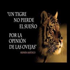 Un Tigre No Pierde El Sueno